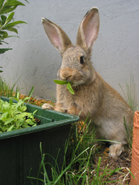 Landscaping Birmingham AL – Tips to Deter Rabbits and Deer