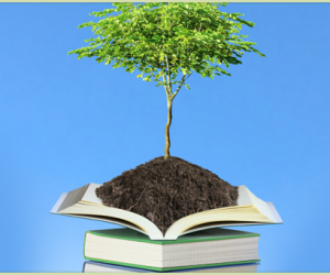 Landscaping in Birmingham – The Best Time to Plant Trees
