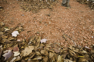 Landscaping in Birmingham – Winter Mulch